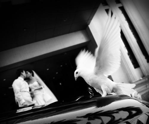 Dove-on-Mercedez